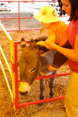 Petting the Animals at the Coastal Carolina Fair