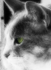 Daisy (melissa_dawn) Tags: cat outdoors feline kentucky ky sony kitty daisy pointshoot hazard picnik sonycybershot melissamiller melissadawn melissadawnmiller