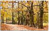 Rainy day (Antonio Carrillo (Ancalop)) Tags: park parque autumn españa canon spain europe sigma explore murcia otoño marques frontpage fuentes caravacadelacruz 1770mm fuentesdelmarques