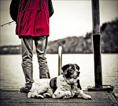 someone to watch over me (TheWalkinMan) Tags: dog pet sepia pier fishing thanksgivingday regal noble nikonsunglassesscoredatthethriftstore
