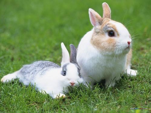 [wallcoo_com]_Lovely_rabbit_Picture_da033021s