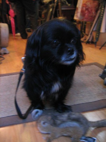 Evan's dog Yak!