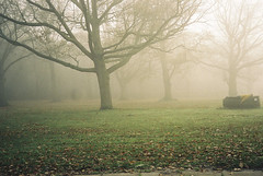 (jcarroza) Tags: uk portrait tree london film fog forest self canon kodak kingston valley 200 putney roehampton a35f