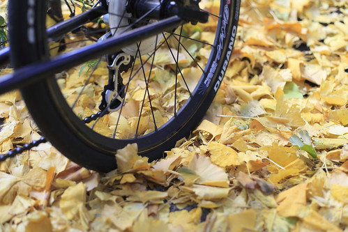 my bycicle, ginkgo