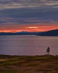 Lone tree sunset (mjardeen) Tags: sunset tree canon golf 5d tacoma 70200f4l landscapesshotinportraitformat