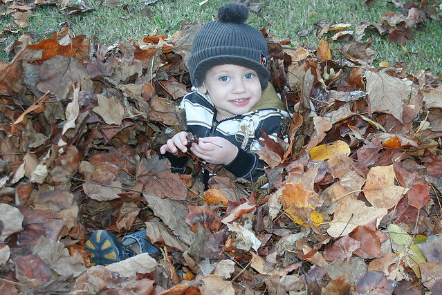 11-19 leaves 5