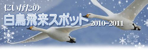新潟の白鳥飛来スポット/新潟県公式観光情報サイト にいがた観光ナビ