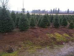 Thorntons Treeland trees