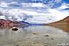 Pangong Tso (Lake), LADAKH, INCREDIBLE INDIA! (Sandeep SK) Tags: china travel india lake water colors landscape nikon kashmir tso leh jk ladakh jammu 2010 pangong otw incredibleindia d3000 sandeepsk