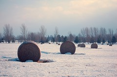 Snow Rolls (GlossyEye.) Tags: road trip winter cloud sunlight snow ontario canada field weather horizontal landscape outdoors photography frozen farm nopeople rolls hay agriculture bale abundance harvesting tranquilscene rolledup nonurbanscene