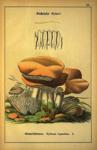 006-Allgemein verbreitete eßbare und schädliche Pilze 1876- Wilhelm von Ahles