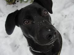 Name the dog (LisaKurr) Tags: