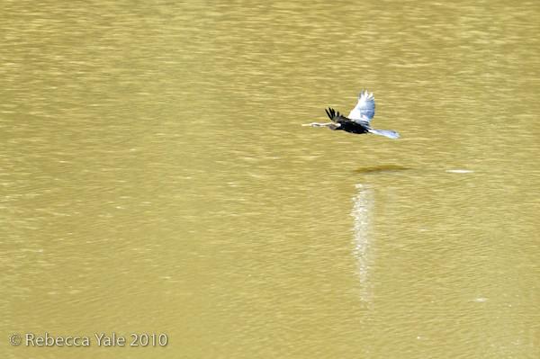 RYALE_Kinabatangan_River_65