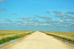 Savanna (Gane) Tags: africa road park sky clouds sand flat fields namibia gravel etosha savanna unpaved