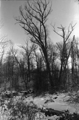 Winter creek 1 (hpulley) Tags: winter blackandwhite film waterloo expired ilforddelta400 canonftbn ilfotecddx ilfostop ilfordrapidfixer yellow8filter ilfotol canonfd35mmf2sscii