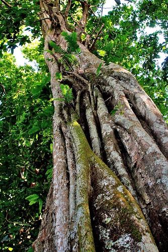 L'albero Ivi
