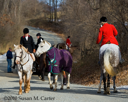 horses, foxhunting, Old Dominion Hounds