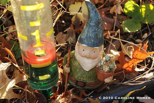 1/2 inch of rain, says the Gnome