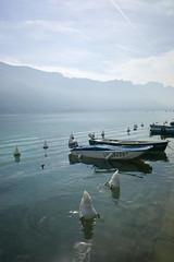 le lac des cygnes (v.ir.g.il.e) Tags: leica mountain lake france alps annecy montagne alpes swan lac cygne m9 summicron28asph