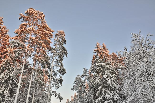 solsken över träden