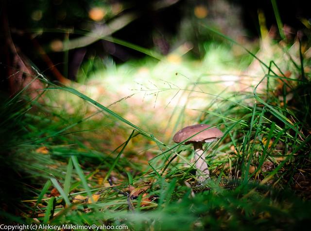 October mushroom