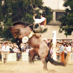 No aflojando... (Eduardo Amorim) Tags: horses horse southamerica caballo uruguay cheval caballos cavalos prado montevideo pferde cavalli cavallo cavalo gauchos pferd hest hevonen chevaux gaucho  amricadosul montevidu hst uruguai gacho  amriquedusud  gachos  sudamrica suramrica amricadelsur  sdamerika jineteada   americadelsud gineteada  americameridionale semanacriolla semanacriolladelprado eduardoamorim iayayam yamaiay semanacriolladelprado2010