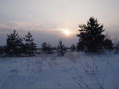 Between two snowstorms (Axiraa) Tags: winter snow tree nature landscape scenery europe estonia baltic lumi puu baum 4winter baltics gmt estland talv viro estonie htu loojang maastik valge  tartumaa vanagram