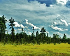 Storm Coming (chumlee10) Tags: trees grass wisconsin clouds sony mercer trail swamp atv wi snowmobile a300 ironcounty mygearandmepremium mygearandmebronze