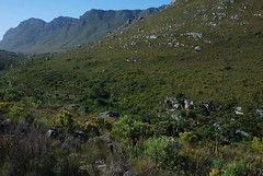Mountain (.donelle) Tags: plants mountain southafrica naturereserve kleinmond inthemountain kogelbergbiosphere