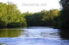 Caroni Swamp Waterway