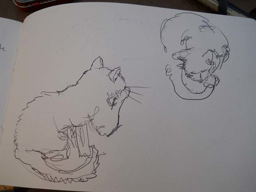 w_2011-01-09_cat-grooming
