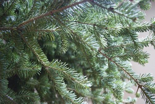 3 Naked Tree