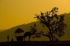 Sunrise at pushkar (daniele romagnoli + 5 million visits) Tags: india sunrise camel indie pushkar indien rajasthan ohhh cammello  hindistan in