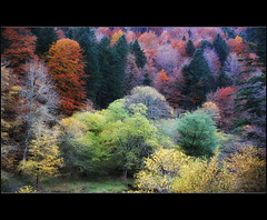 true colours (kypt@nuy ~ very busy!!!) Tags: wood autumn trees naturaleza nature true leaves woodland landscape spain rboles colours paisaje colores bosque stunning otoo wilderness navarra impresionante irati kyptanuy kyptnuy helenamanso