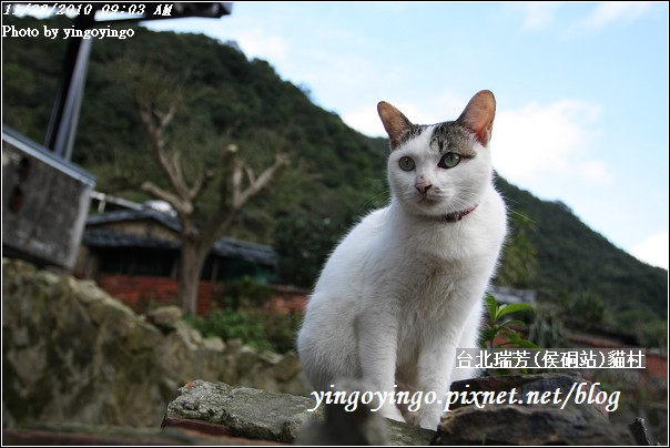 台北瑞芳(侯硐站)貓村20101128_I5617