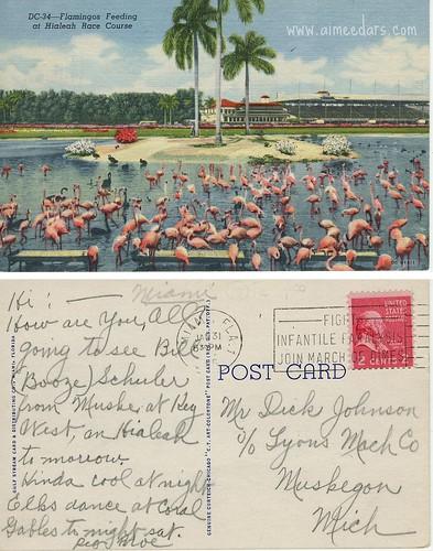 Flamingos - Hialeah Race Course