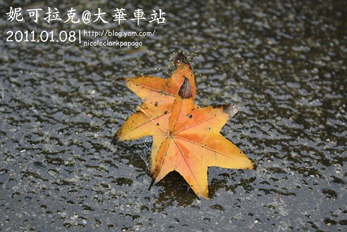 石碇2011-01-08-012