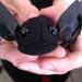 Fuzzy Spidey kisses to all. Alice Springs. NT, Autralia 15NOV10