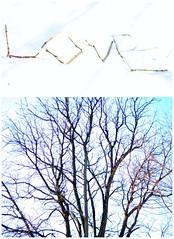 92.365+16.branches+HSS (quarter.century) Tags: item collaboration picnik hss slidersunday
