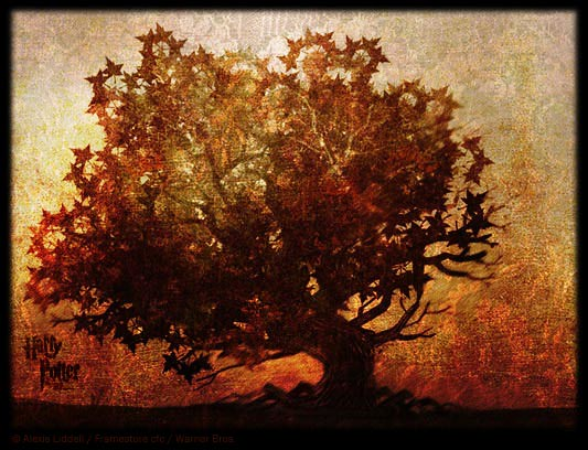 Elder_tree_001