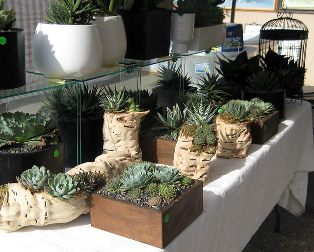 sm.plants