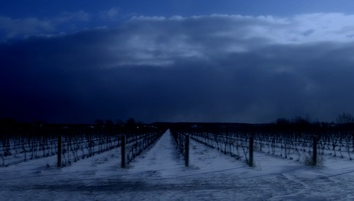 Vineyards in Winter-sunset