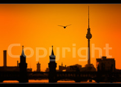 Lonely Duck over Berlin (Marcus Klepper - Berliner1017) Tags: bridge sunset orange berlin bird silhouette river kreuzberg germany deutschland abend duck heaven sonnenuntergang view air flight himmel alexanderplatz fernsehturm rotesrathaus brcke fluss ente spree sonne friedrichshain luft blick vogel verkaufen oberbaumbrcke televisontower flug sharpness osthafen wolkenlos flus einsahm