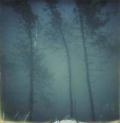 misty  03 (www.matteovarsi.com) Tags: wood woods forest mist fog morning trees tree nature colors impossible colorfilmxsx70camera