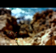 There is one spectacle grander than the sea, that is the sky; there is one spectacle grander than the sky, that is the interior of the soul. (*karla) Tags: sea summer flower canon 50mm dof bokeh explore frontpage