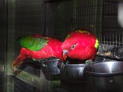 Tilgate Park - Aviary