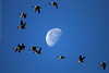 Fly Me To The Moon (Trausti Ólafsson) Tags: top20blue imagesforthelittleprince