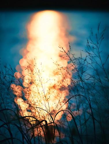 339/365: Sunrise Bokeh Explosion by pixelmama