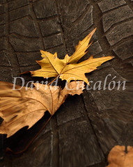 Distortion (David Cucaln) Tags: city autumn urban distortion art leaf olympus otoo 2010 distorsion tardor digitalcameraclub cucalon 1442mm davidcucalon