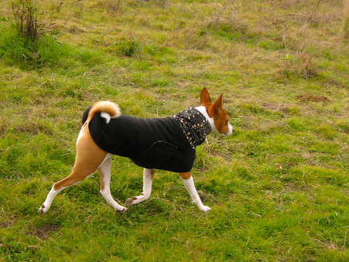 Long with Curly Tail Dogs Breeds